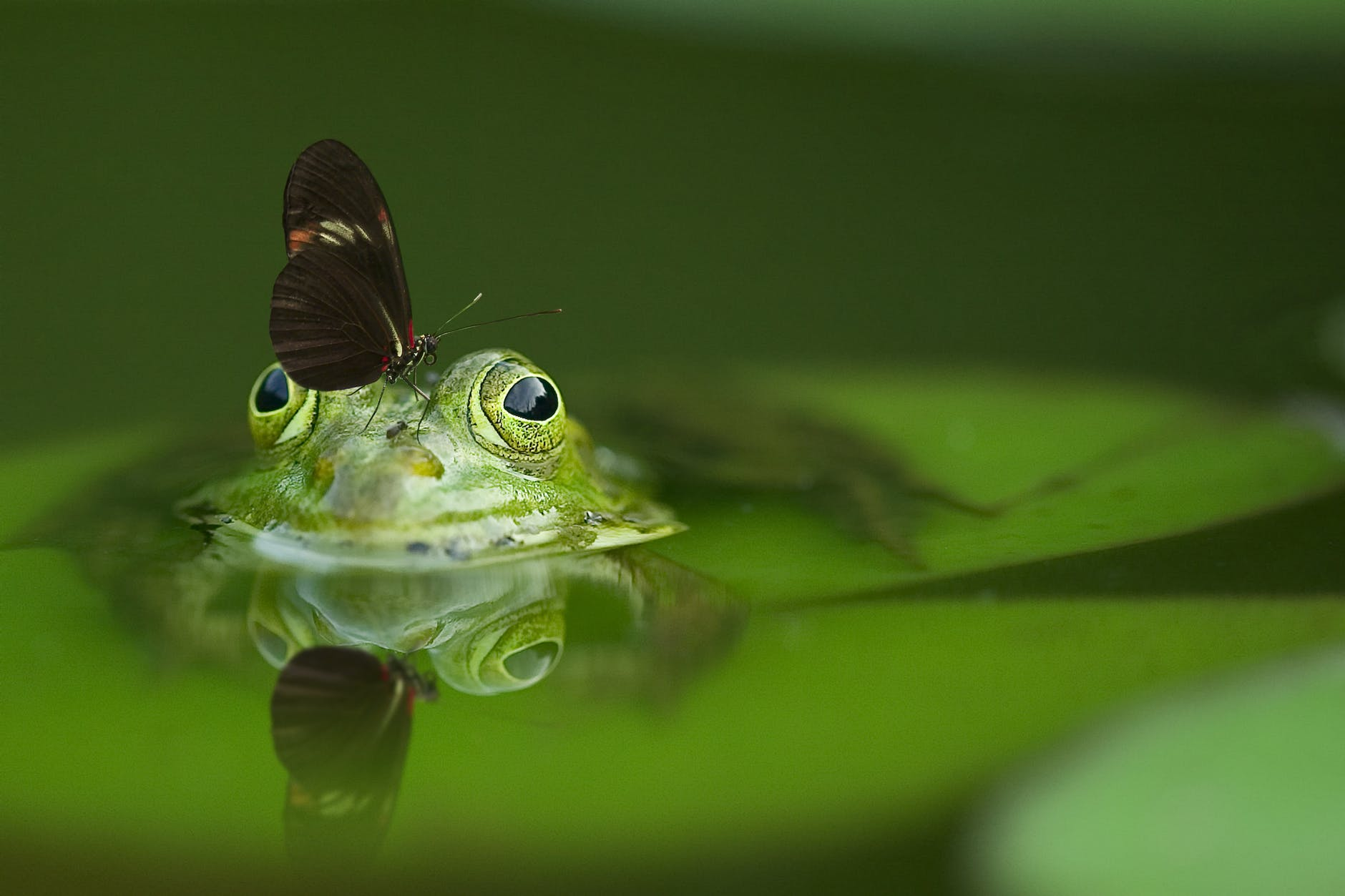 WISER, GREENER AND PEACEFUL CREATURE – FROGS
