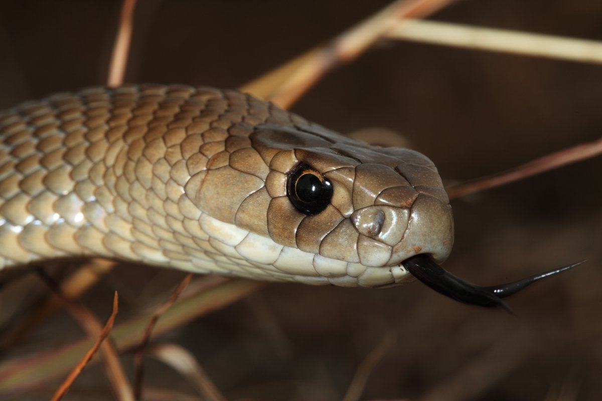 SNAKE – A REPTILE THAT REFLECTS VOLUMES OF WISDOM